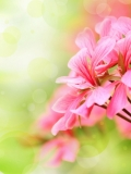 Beautiful floral background with pink flower buds and defocused